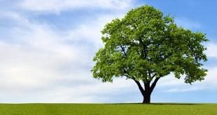 incontro albero 22 ottobre
