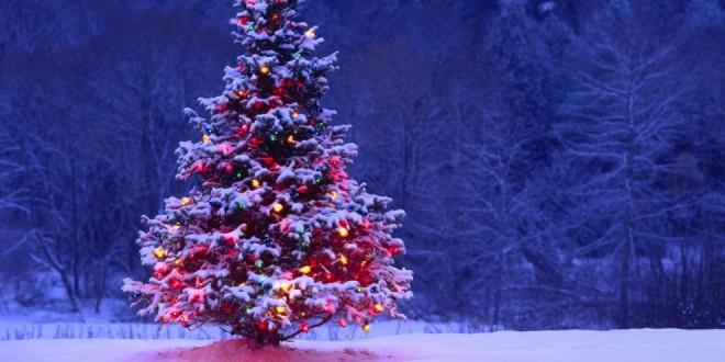 Immagini Natale Natura.Natale In Casa Della Natura Fondazione Grosseto Cultura